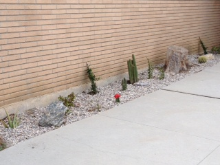 plants at entrance